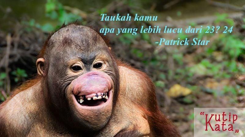 Kata Kata Konyol Lucu - Patrick Star